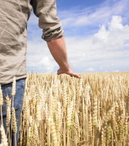 Young man in wheat field
