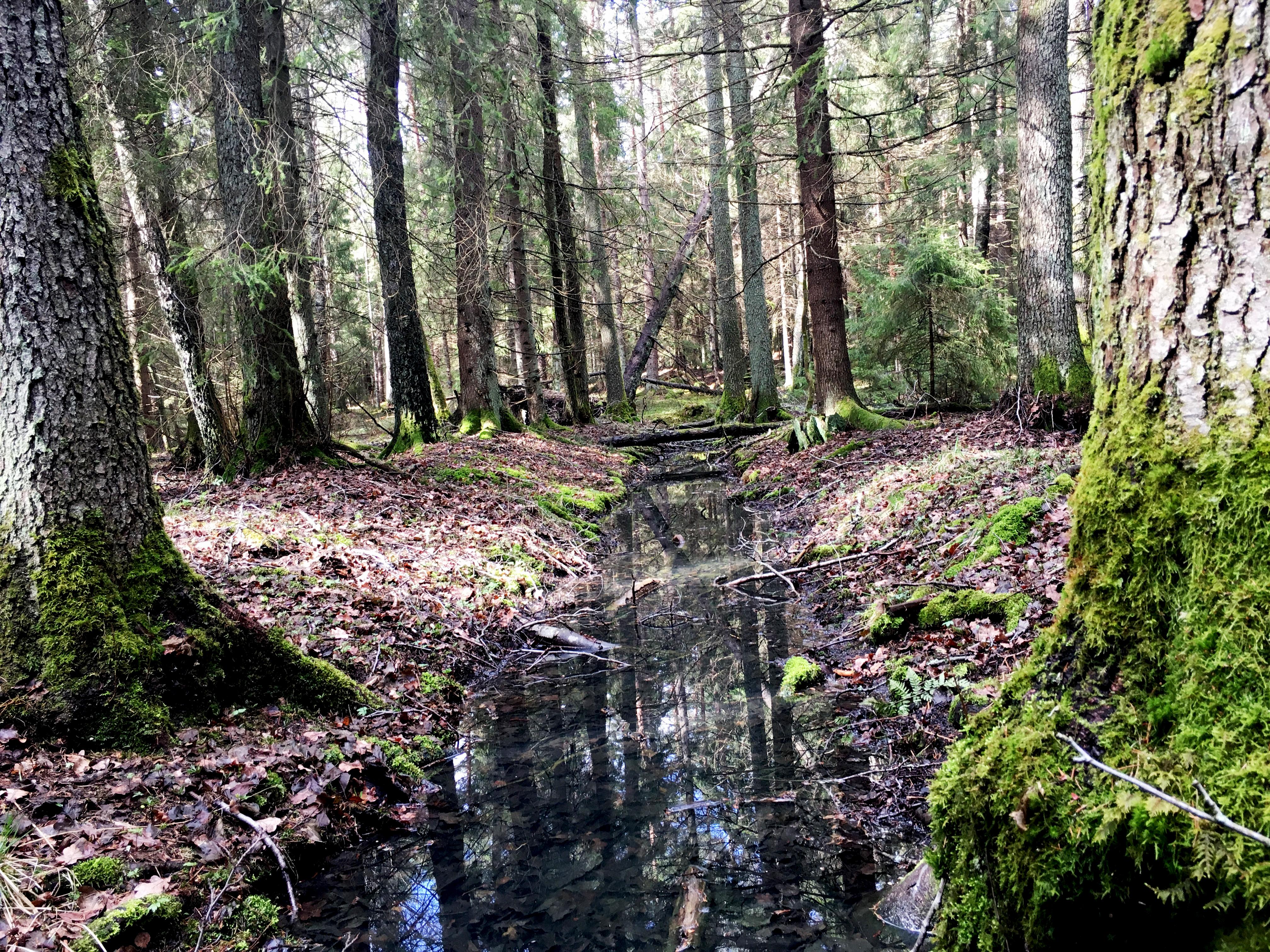 8 av 10 skogsägare vill frivilligt öka naturvärdena i sin skog