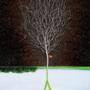 Nytt betningsmedel ger svenska växtodlare möjlighet till bättre etablering