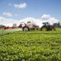 Växternas kemiska krigföring ökar vid varmare klimat
